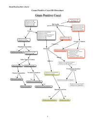 Identification Flow Chart