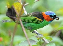 Serra Bonita Reserve - Conservation Birding