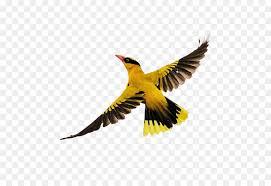 birds flying. Unique Flying Bird Flight  Birds Flying On Flying F