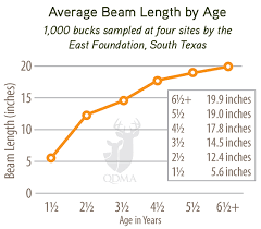 Whitetail Deer Size Chart Can You Estimate A Bucks Age From His Shed Antler