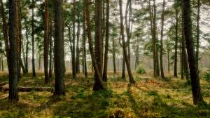 20 Forest Backgrounds Wallpapers Free Creatives