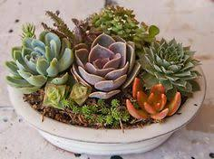 Succulent Plant Arrangements Containers | Succulent Arrangement in White  Oval Bonsai Container | eBay