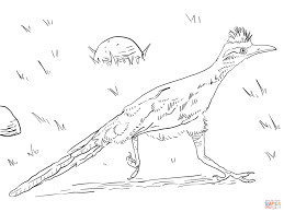 Small Picture Greater Roadrunner coloring page Free Printable Coloring Pages
