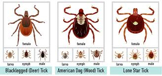 Tick Size Chart What Do Ticks Look Like New York State Integrated Pest