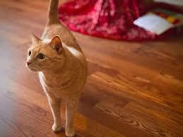 cat to eat indoor plants