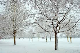 essays on winter vacation my winter holidays Мои зимние essay winter holidays usingenglish com