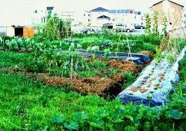 landscape garden design gardening jobs planner best ideas landscaping image of vegetable layout plans and spacing
