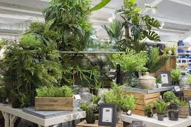 house plants. Houseplants House Plants A