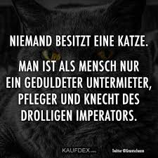 Niemand Besitzt Eine Katze Man Ist Als Mensch Nur Ein Geduldeter