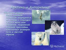Презентация на тему РЕФЕРАТ ПО ФИЗИКЕ Термодинамика  7 Арктика