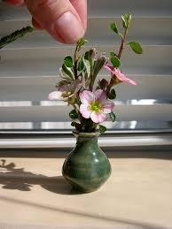 image of miniature flower arrangement के लिए चित्र परिणाम