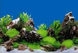 Aquarium Backgrounds New Aquarium Accessories Plastic Aquarium Background Coral