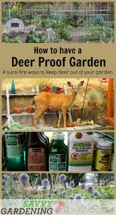 four useful and practical tactics to lead you toward a deer proof garden