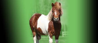 Ondersteuning Equine Supplementen Supplementen Voor Paarden