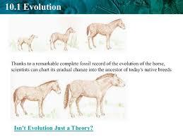 Biology Ch10 Evolution