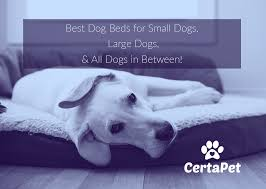 small dog beds on sale.  Small The Best Dog Beds For Sale From Small Dogs To Large Throughout On Sale