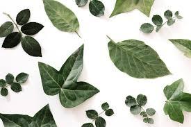 difees tipos de hojas verdes