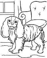 Honden En Poezen Kleurplaten