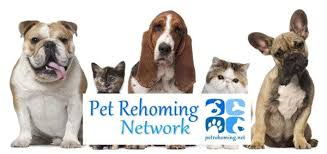Cat Rehoming Rehome Pet In Services - Ohio Dog Or A