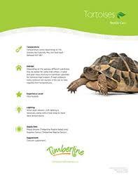 Indian Star Tortoise Diet Chart Caring For Tortoises Timberline