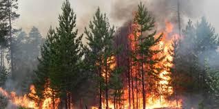 Лесные пожары причины типы интересные факты фото  лесной пожар