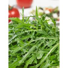 rocket italian cress arugula seeds