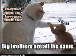 Funny Brother Quotes Amazing Funny Quotes About Big Brothers Quotes