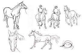 Horse Studies1 Png 1437 982 Art