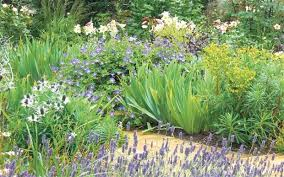 Small Picture Mary Keens fail safe summer borders Telegraph