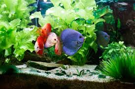 Light Requirement For Planted Aquarium How To Set Up A Planted Aquarium Step By Step Guide