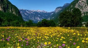 Digitalno Razdeljevanje pravočasno cvetlice - fsilvermanphotography.com