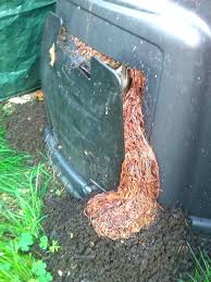worm compost bin composting worms play the web worm composting bins compost worms new worm compost worm compost bin chunk wooden worm compost bin plans