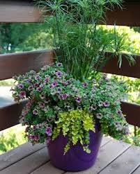 container gardening. Experts Tips For A Lush Patio Garden Container Gardening M
