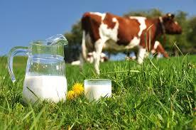 Курсовая Повышение эффективности производства молока на примере  Курсовая Повышение эффективности производства молока на примере СПК Экономика предприятий отрасли