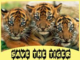 save tiger essay for students and kids in english save tiger essay
