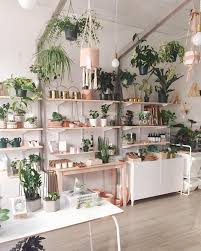 Lets Get Planty 9 Air Purifying Plants To Help You Breathe
