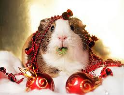 cute animal christmas backgrounds. Interesting Animal PREVIOUS RANDOM NEXT For Cute Animal Christmas Backgrounds D