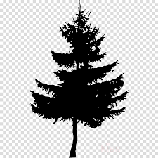 Pine Illustration Tree Transparent Png Image Clipart Free Download