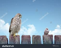 big small birds sitting on fence stock photo shutterstock big and small birds sitting on a fence strength and weakness concept