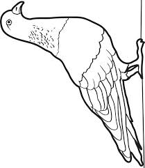 Small Picture Bird Pigeon Coloring Page Rock for Pigeon Coloring Pages learn