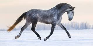 andalusian horse origins impact and