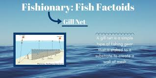 Electric Edge Systems Group Fisheryfacts Twitter