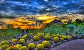 for nearly 80 years the desert botanical garden has been teaching and inspiring visitors from the local community and around the world providing research