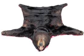 world s leading outfitter in taxidermy mounts animal heads bear rug with head average bear skin
