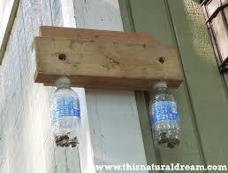 bees in bottle