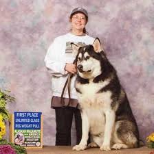 Alaskan Malamute Puppy Weight Chart Dogs Breeds And