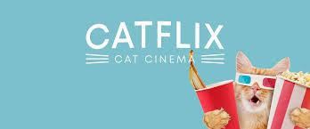 Uma tribo de gatos chamada jellicles deve decidir anualmente qual deles irá subir para a camada heaviside layer e voltar para uma nova vida de jellicles. Catflix Cat Cinema Catmosphere
