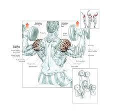 at home table biceps training healthy fitness exercises arm Body Transformation Workout Plan At Home at home table biceps training healthy fitness exercises arm ~maniac~ and after recovery pinterest biceps training, biceps and exercises Body Fat Loss Before and After