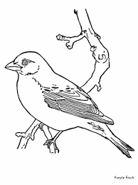Small Picture Bird Coloring Pages Coloring Kids Pinterest Bird