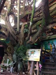 Neverland Room  Picture Of Hidden Canopy Treehouses Boutique Treehouse Monteverde Costa Rica